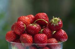 Шар зрелых straberries в саде Стоковая Фотография