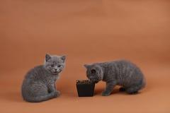 Шар корма для домашних животных Стоковая Фотография
