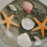 Шар объектов океана Стоковое Изображение