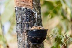 шар пропускает вал молока резиновый деревянный Стоковые Изображения