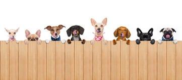 Шар собаки стоковая фотография