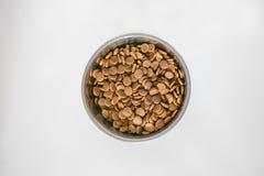 Шар собачьей еды стоковая фотография rf