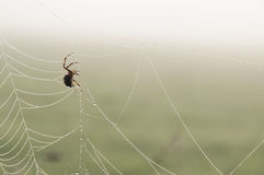 Шар-сплетя паук (diadematus Araneus) на сети Стоковое Фото