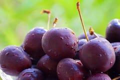 Шар сладостной вишни Стоковые Изображения RF
