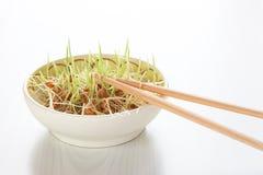 Шар с ростками пшеницы и деревянными палочками на светлом backgroun стоковая фотография rf