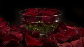 Шар с цветками на черноте Стоковые Изображения RF