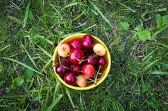 Шар с cerries Стоковое Фото