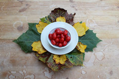 Шар томатов окруженных листьями осени стоковая фотография rf