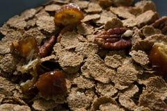 Шар хлопьев пшеницы и высушенных плодоовощей Стоковые Изображения RF
