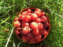 Шар ягод Стоковое фото RF
