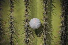 Шар для игры в гольф вставленный в дереве кактуса Saguaro Стоковая Фотография