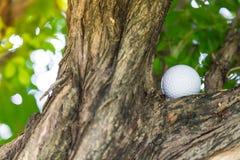 Шар для игры в гольф в дереве Стоковая Фотография RF