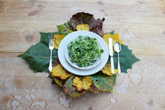 Шар microgreens окруженных листьями падения стоковое изображение rf