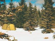 Шатер в ландшафте зимы Trekking шатер, поляки, красные snowshoes на снеге между деревьями стоковое фото rf