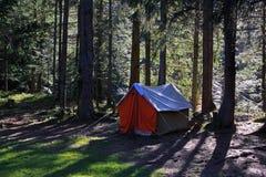 Шатер в coniferous лесе Стоковые Изображения