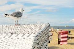 Шатер Borkum пляжа с чайкой моря Стоковое Изображение RF