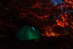 Шатер на ноче в лесе в лагере Стоковые Изображения RF