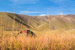 Шатер на траве в долине гор на заднем плане южного Казахстана Стоковое Изображение RF