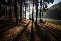 Шатер под сосновым лесом на утре против яркого sunligh Стоковая Фотография