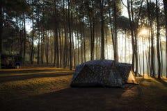 Шатер под сосновым лесом на утре против яркого sunligh Стоковое фото RF