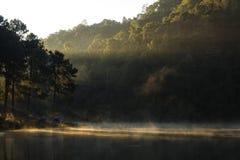 Шатер под сосновым лесом на утре против яркого sunligh Стоковое Фото
