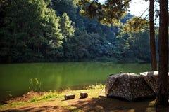 Шатер под сосновым лесом на утре против яркого sunligh Стоковое Изображение