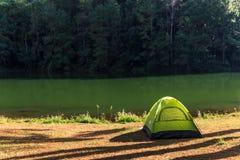 Шатер под сосновым лесом Стоковая Фотография