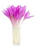 Шафран лужка в вазе Стоковое Фото