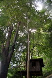 Шалаш на дереве Стоковое фото RF