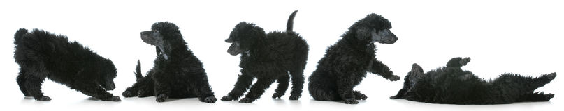 Шаловливые щенята Стоковое фото RF