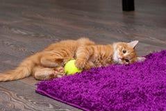 Шаловливый котенок имбиря Стоковые Фото