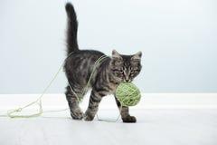 Шаловливый котенок Стоковое Изображение