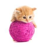 Шаловливый котенок Стоковое Фото