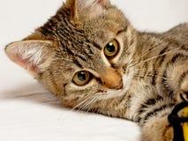 Шаловливый котенок. Стоковая Фотография