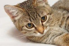 Шаловливый котенок. Стоковые Изображения