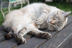 Шаловливый кот лежа на стенде Стоковая Фотография