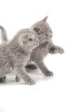 2 шаловливых маленьких котят Стоковые Изображения