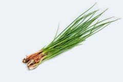 Шалот сезонных овощей малый Стоковое Изображение RF