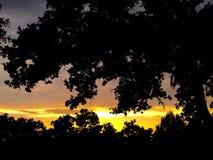Шальное солнце Стоковые Изображения RF