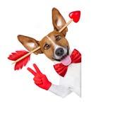 Шальной в собаке валентинок влюбленности Стоковое Изображение RF