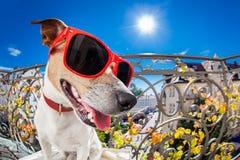 Шальной придурковатый тупой взгляд fisheye собаки Стоковое Изображение RF