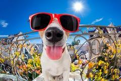 Шальной придурковатый тупой взгляд fisheye собаки Стоковые Фото