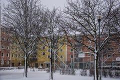 Шведская зима, деревья без листьев Стоковое фото RF