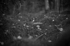 Шведский гриб стоковые фото
