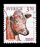 Шведский красный Тавр primigenius быка скотин - женский, serie домашних животных, около 1995 Стоковые Фотографии RF