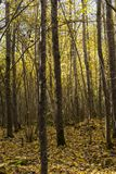 Шведский лес осени Стоковое фото RF