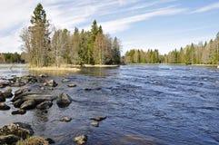 шведский язык зоны salmon Стоковое Изображение RF