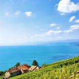 Швейцарская деревня на тропе террас виноградника Lavaux в Швейцарии Стоковая Фотография RF