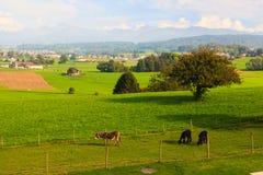Швейцарская деревня Стоковая Фотография RF