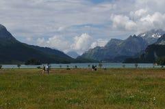 """Швейцарские Альп: Пеший туризм на ледниковом озере """"Silsersee """"в верхнем Engadin стоковая фотография"""